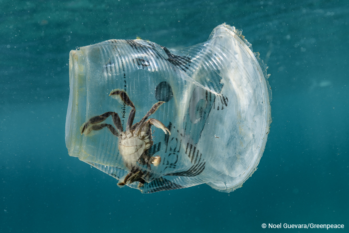 A crab is floating in the ocean trapped in a plastic glass
